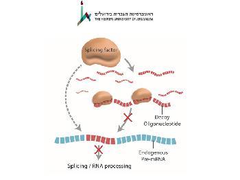 Israelische Wissenschaftler täuschen Krebszellen