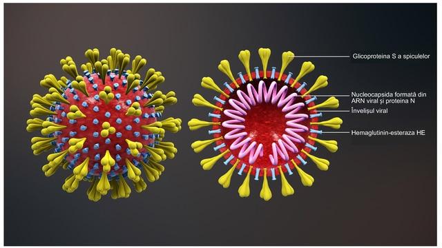 Corona - wo grassiert das Virus auffallend stärker und warum?