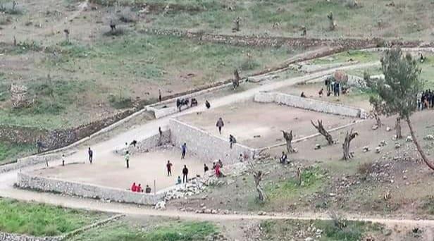 Lesbos: Unzufriedene Migranten vernichten 5.000 Olivenbäume