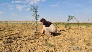 Israel: Die Bepflanzung der Wüste geht weiter [Video]