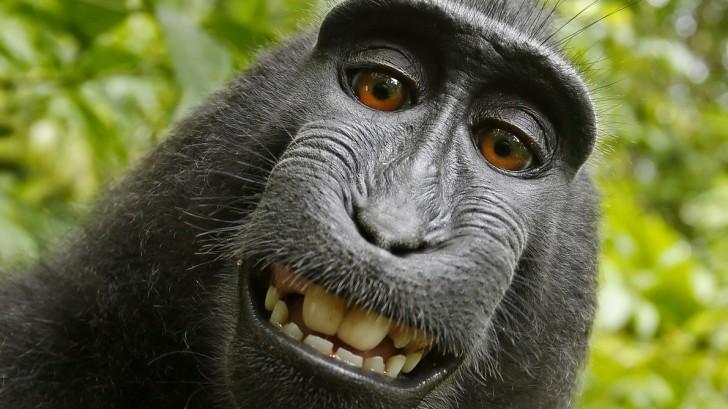 Corona-Krise: Lasst euch nicht zum Affen machen!