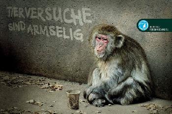 Strengere Regeln für Tierversuche