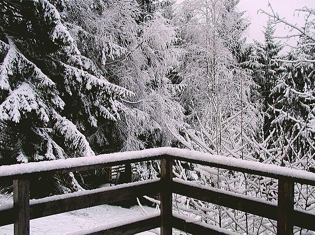 Stell dir vor, es ist Winter - und es schneit!