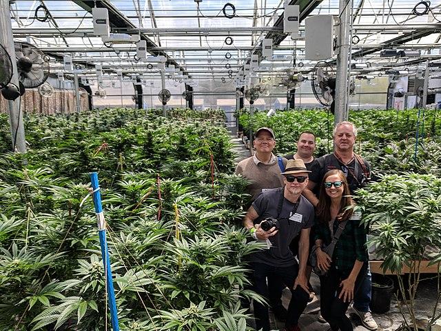Marokko legalisiert Cannabis-Anbau