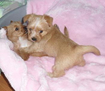 Klimaschdlinge-Wird-die-Hundehaltung-bald-verboten