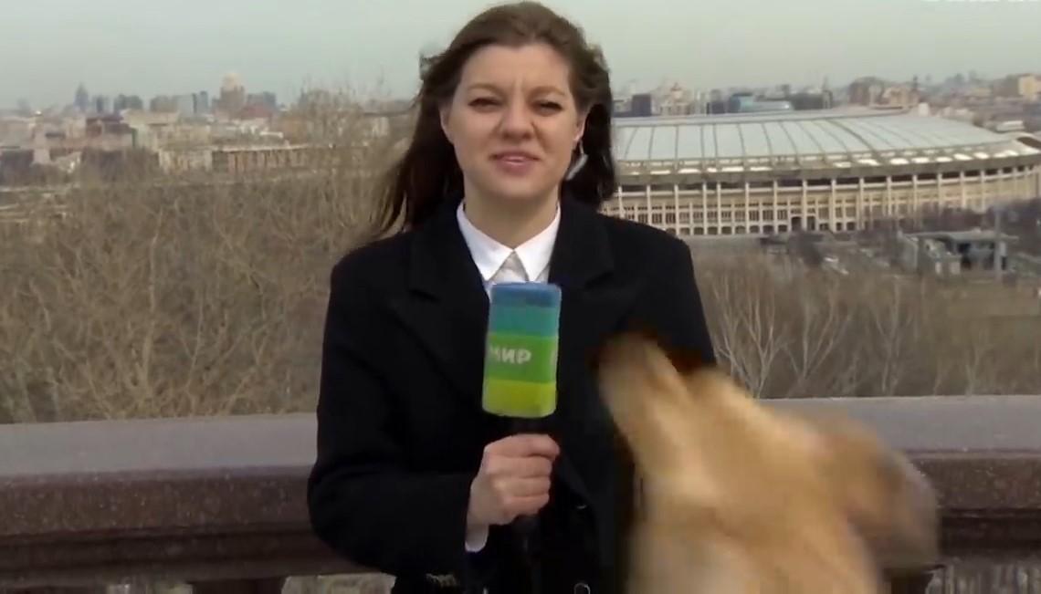 Hund unterbricht die Sendung, stiehlt das Mikrofon der Reporterin [Video]