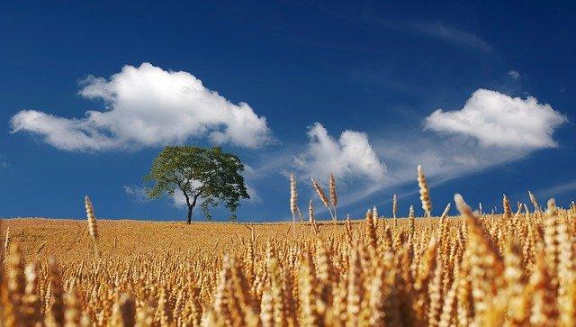 """Getreidehändler sehen """"historische Preisausschläge"""""""