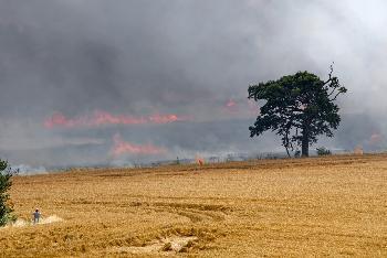 UNO-verurteilt-israelische-Bauern-wegen-Beschdigung-von-Terrorballons-aus-dem-Gazastreifen
