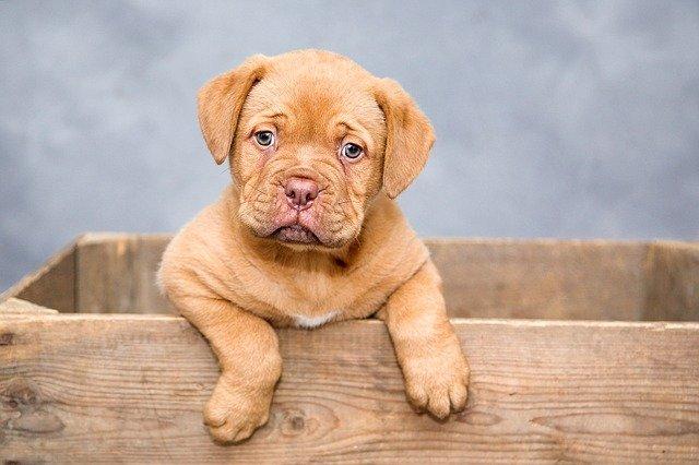Tel Aviv: Wir testen DNA von Hundekot und bestrafen die Besitzer
