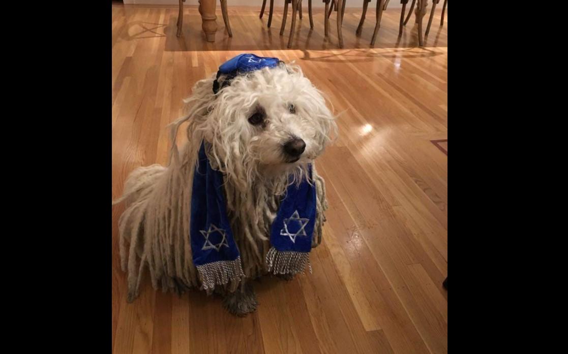 Mark Zuckerbergs kippatragender Hund löst eine Flut von antisemitischem Hass aus