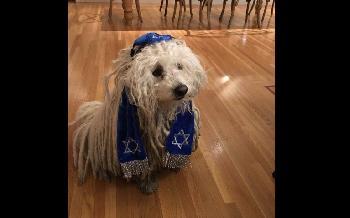 Mark-Zuckerbergs-kippatragender-Hund-lst-eine-Flut-von-antisemitischem-Hass-aus