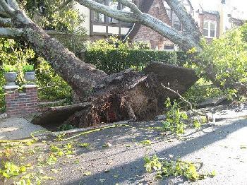 Tornado-hat-in-der-Gemeinde-Groheide-eine-Schneise-der-Verwstung-hinterlassen