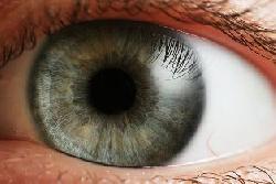 Bionisches Auge entwickelt