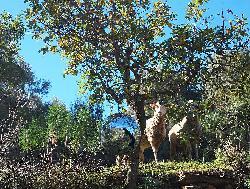 Todesurteil für die  `jüdischen´ Olivenbäume der Türkei und die Unvereinbarkeit von Scharia und Menschenrechten