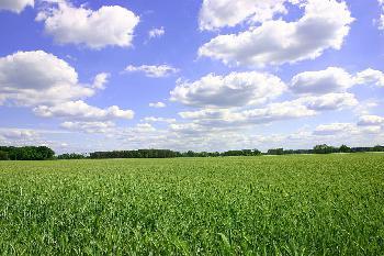 Grüne laufen heiß - wir müssen Klimafushima-Moment verhindern