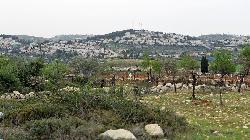 Juden und Palästinenser feiern in Siedlung
