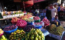 Neue Restriktionen der Hamas – Obst verrottet an der Grenze von Gaza