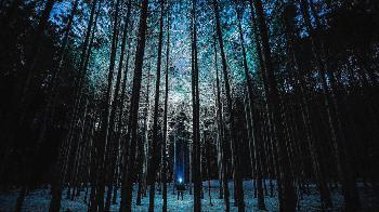 Energiewende: Deutschland allein im Wald