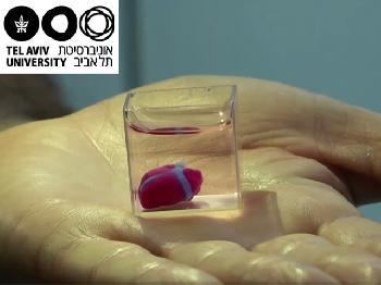 Israelische Wissenschaftler drucken erstmals Herz