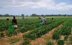 Französische Bauern übernehmen israelische Bewässerungstechnik