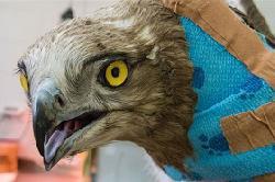 Blutbank für Vögel eingerichtet