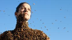 `Ohne mich´, sagte die Biene zum Bienensterben