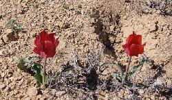 Israel hilft anderen Ländern bei der Bekämpfung der Wüstenbildung
