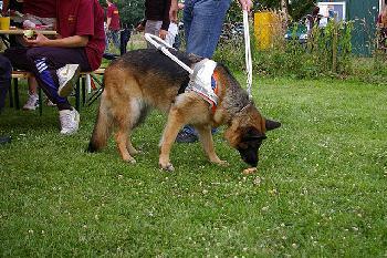 Taxifahrer verweigert Blindenhund die Mitfahrt