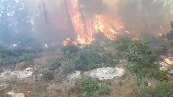 Hitzewelle verursacht Waldbrände in Israel