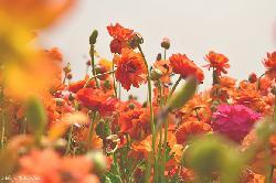 Was blüht denn da? - Blumen-App weiß die Antwort