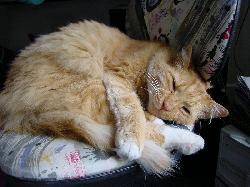 Katze stirbt fast an veganer Zwangsernährung
