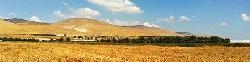 Neue landwirtschaftliche Forschung in Israel